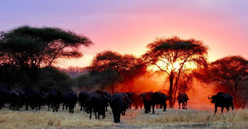 Tanzania w domu